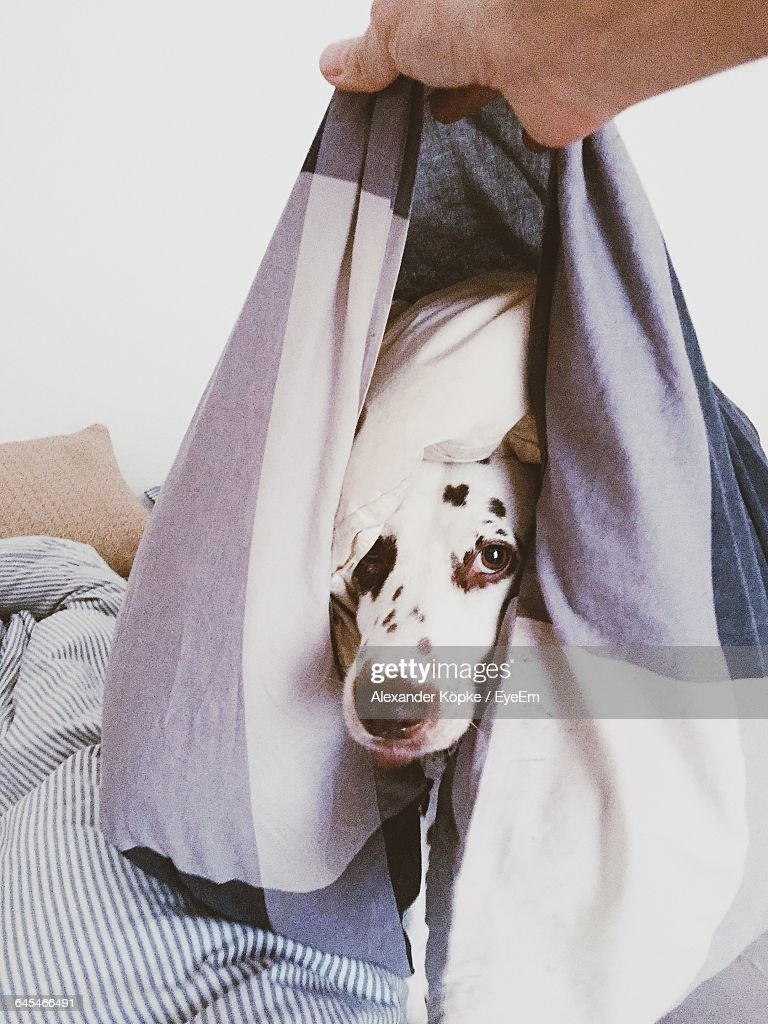 Cropped Image Of Hand Holding Dog In Pillow Cover