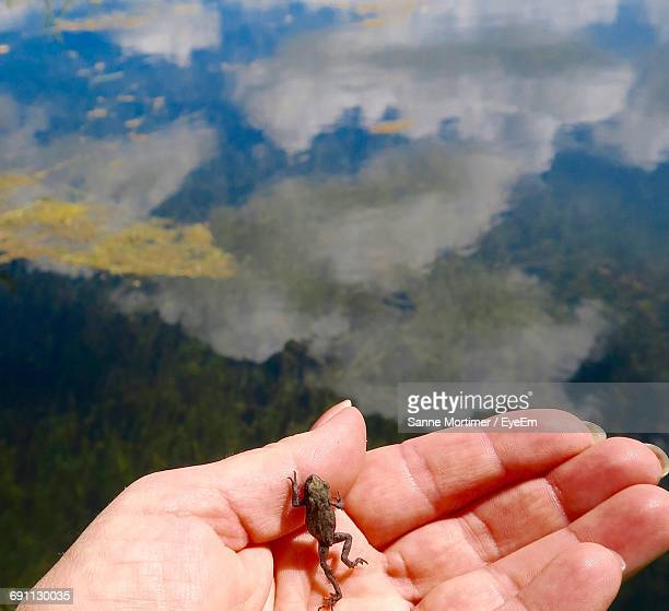 Cropped Image Of Hand Holding Little Frog Against Sky