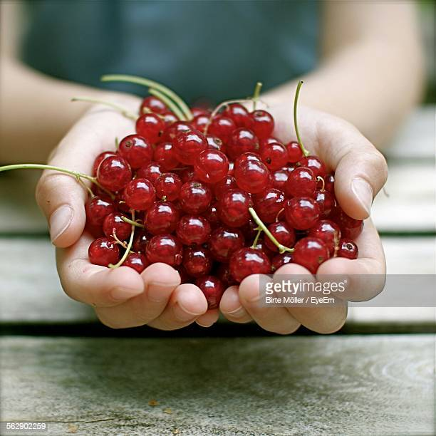 Cropped Image Of Hand Holding Redcurrant Berries