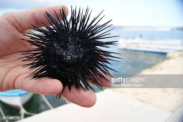 Cropped Image Of Hand Holding Sea Urchin At Beach