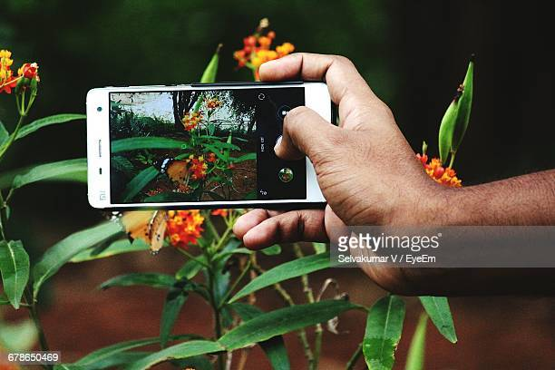 Cropped Image Of Man Photographing Butterfly Pollinating On Flowers