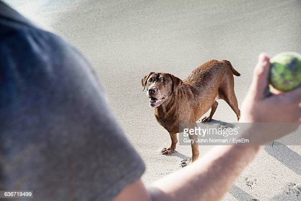 Cropped Image Of Man Throwing Ball Towards Dog On Beach