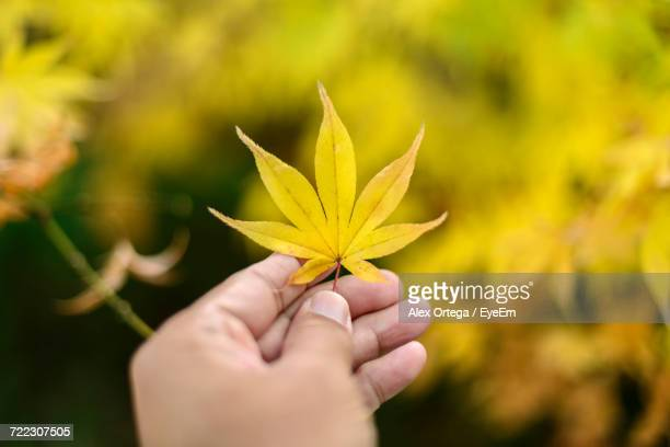 Cropped Image Of Person Holding Autumn Leaf
