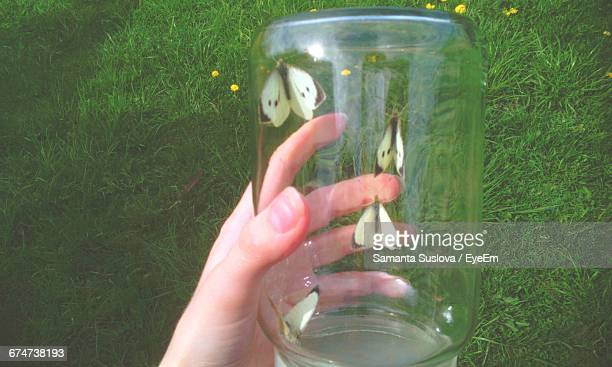Cropped Image Of Person Holding Butterflies In Glass Jar