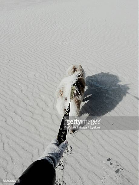 Cropped Image Of Person Walking With Dog On Sandy Beach