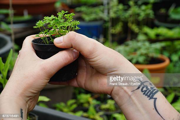 Cropped Image Of Tattooed Hands Holding Potted Plant In Yard