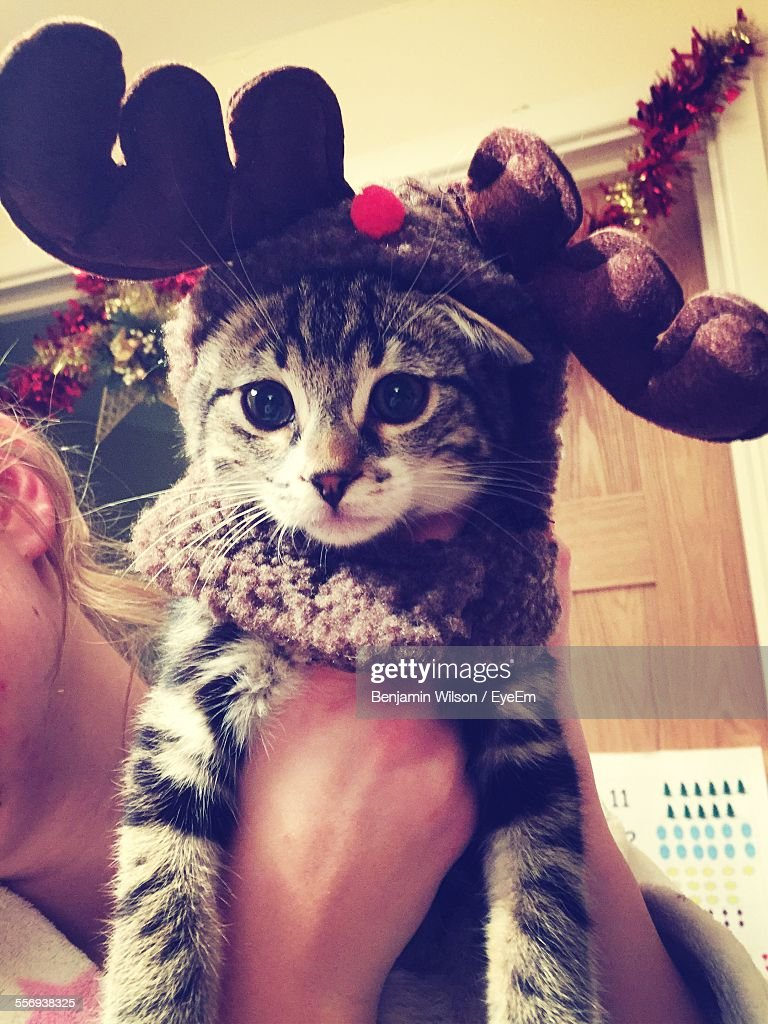 Cropped Image Of Woman Holding Cat At Home During Christmas