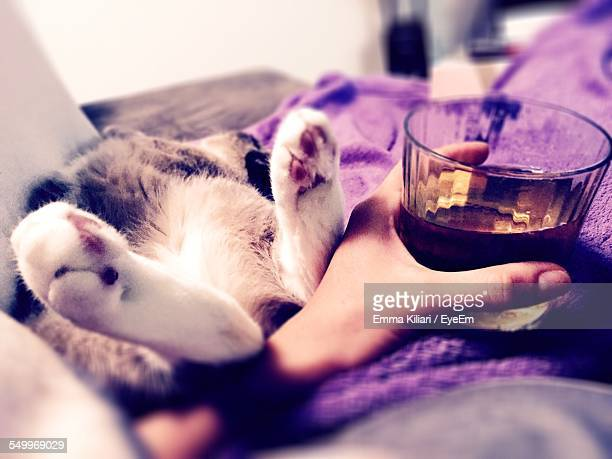 Cropped Image Of Woman Holding Glass Of Whiskey By Sleeping Cat On Sofa