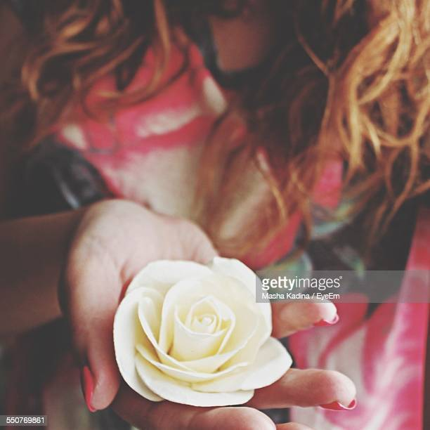Cropped Image Of Woman Holding White Rose