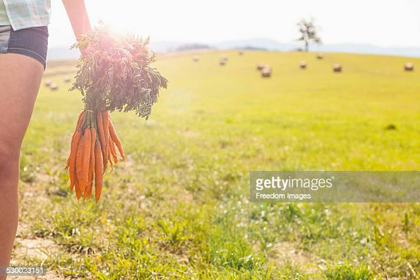 Cropped shot of young woman carrying bunch of fresh carrots in field