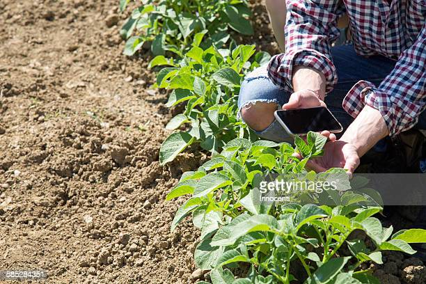 Cropped view of young man crouched in vegetable garden holding smartphone