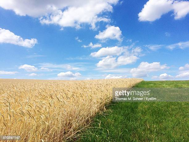 Crops And Grass Growing On Farm Against Sky