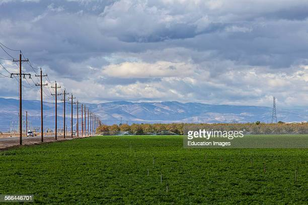 Crops being irrigated in Kern County San Joaquin Valley California