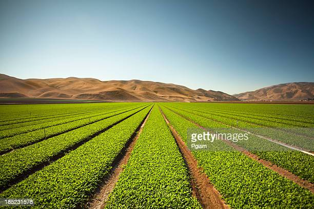 Crops grow on fertile farm land