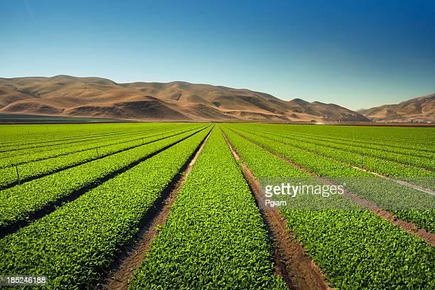 Pflanzen wachsen auf fruchtbaren landwirtschaftlichen Nutzflächen
