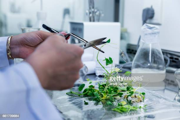 The cold storage and lab facilities for plant multiplications purposes at the offices of the International Center for Tropical Agriculture CIATs...