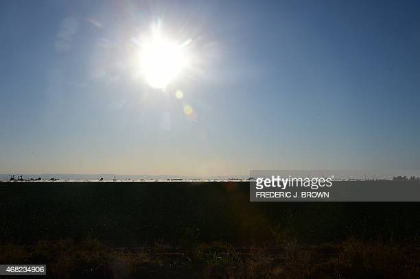 Crops in the distance are watered beneath the sweltering sun on March 29 2015 in Kern County California which became the nation's number 2 crop...