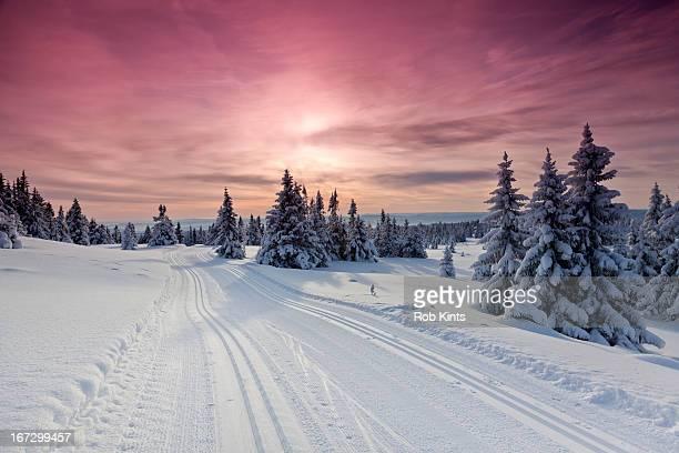 Cross country ski tracks at sunset