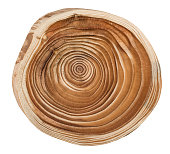 Cross section of larch tree trunk showing growth rings isolated on white background.