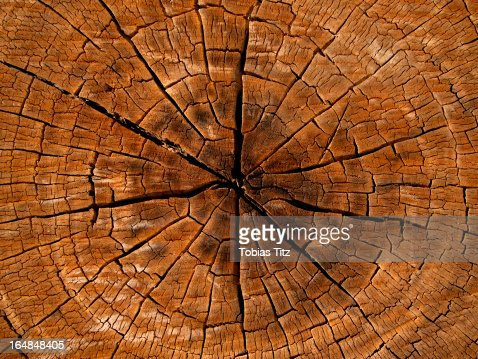 Woodland Stock Photos and Pictures | Getty Images