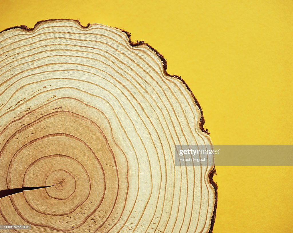 Cross section of tree trunk, annual rings : Stock Photo