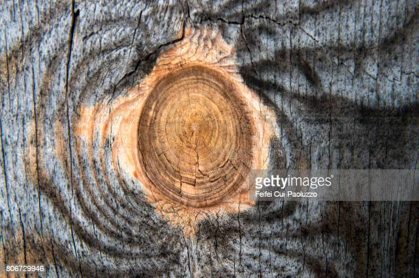 Cross Section Of Tree Trunk at Temple, Texas state, USA