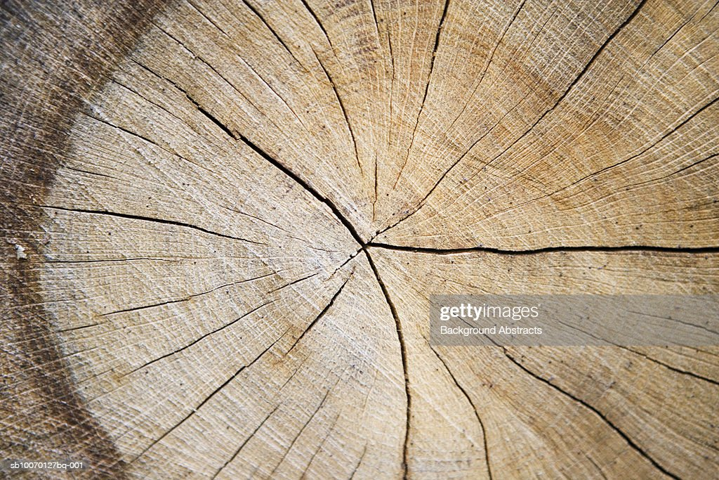 Cross section of tree trunk : Stock Photo