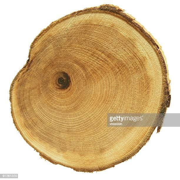 Querschnitt Holz