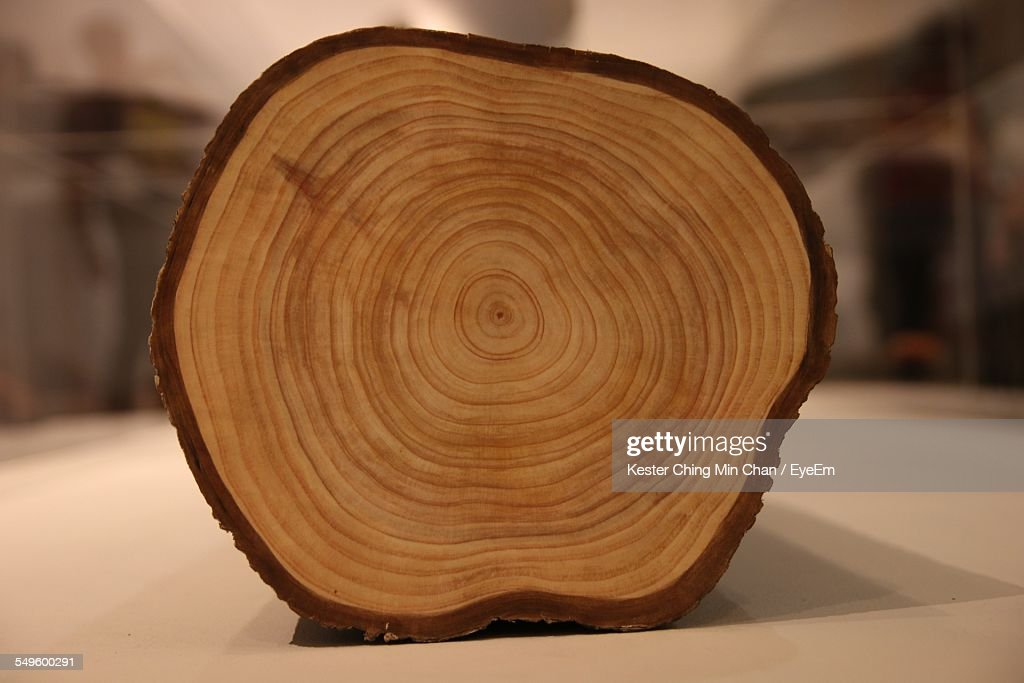 Cross Section Of Wooden Log : Stock Photo