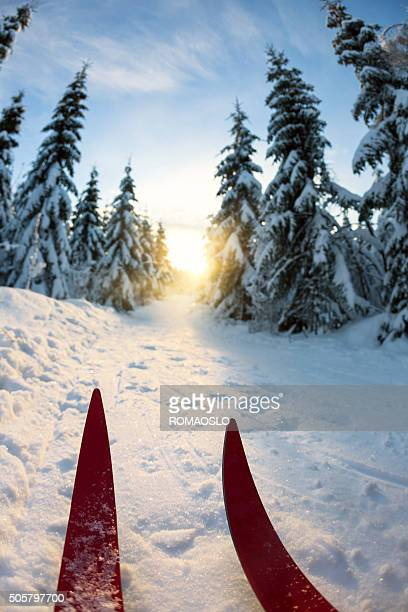 Cross-country skiing at sunset in Oslo, Norway