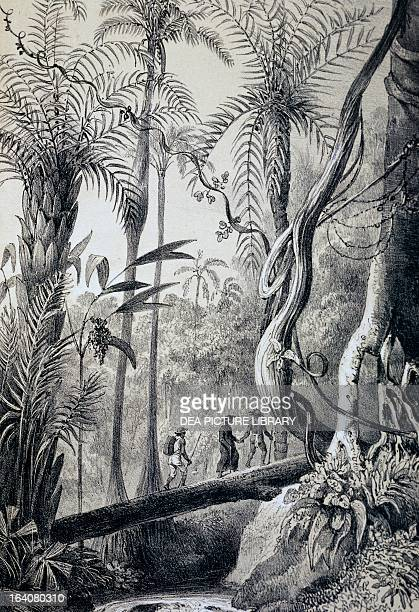 Crossing the Amazon rainforest engraving South America 19th century