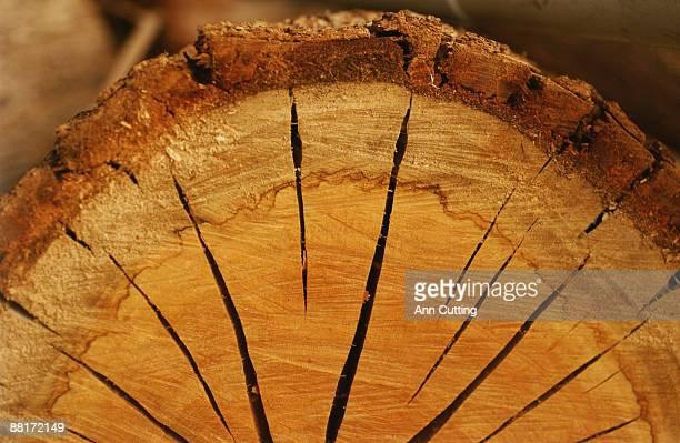Cross-section of log