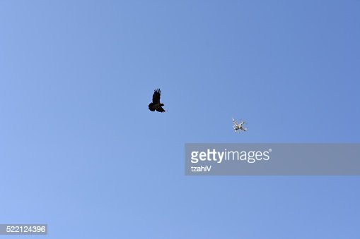 Crow  attack Drone