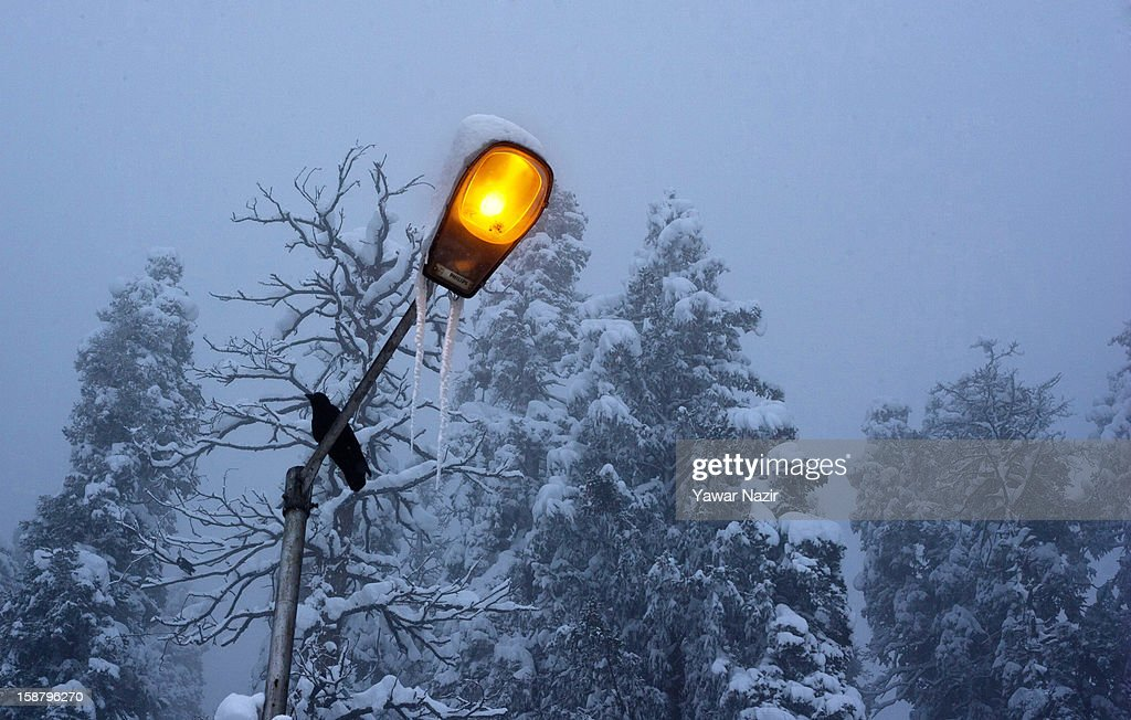 A crow rests on a lamp post during a snowfall on December 29, 2012 in Gulmarg, 54 km (35 miles) to the west of Srinagar, the summer capital of Indian-administered Kashmir, India. With the second round of heavy snowfall in Kashmir valley, skiers from around the globe have descended on the ski resort of Gulmarg, known for long-run skiing, snow-boarding, heli-skiing and steep mountains. Gulmarg is located less than six miles from the ceasefire line or Line of Control (LoC) that divides Kashmir between India and Pakistan. As a sense of normalcy has started to return to this strife-torn region, various foreign governments, including the United Kingdom, have lifted the travel advisory to its citizens traveling to Kashmir, raising the hopes of the local tourism industry, officials said.