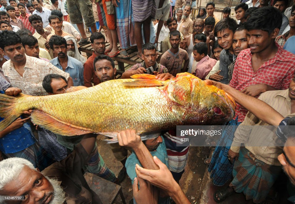 A crowd of people gather to catch a glimpse of a golden snapper fish (C) at Ghat fish market in Bangladesh's southeastern port city of Chittagong on April 4, 2012. A snapper fish caught by fishermen in the Bay of Bengal on April 4 has been sold at 40,000 USD because of its rare golden colour.