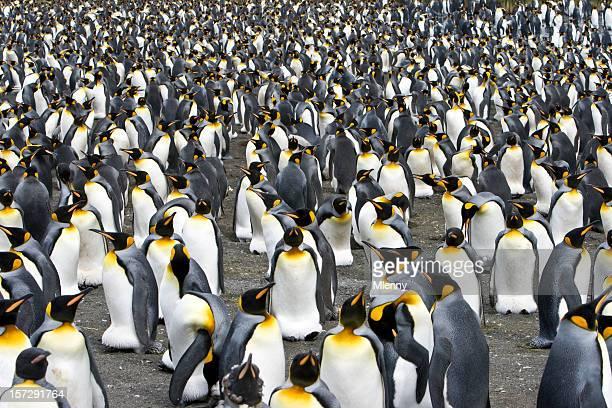 Multitud colonia de pingüinos