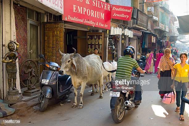 Crowded street scene people cows traffic at Sardar Market at Girdikot Jodhpur Rajasthan Northern India