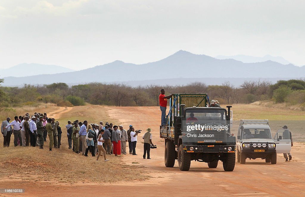 Crowds greet rhinos as they make their way in convoy though Mkomazi National Park during their translocation from Port Lympne Wildlife Park to Mkomazi National Park on June 17, 2012 in Mkomazi, Tanzania. The Aspinall Foundation along with the Tusk Trust and the George Adamson Trust are combining forces to stage a rare translocation of three captive born black rhino to Mkomazi National Park in Tanzania in order to rejuvenate numbers of the black rhino in the area. The three animals, Grumeti, Monduli and Zawadi are being airlifted in a dedicated DHL Boeing 757 from Manston Airport in Kent direct to Kilimanjaro Int Airport in Tanzania. The three black rhino have been donated by Damian Aspinall, Chairman of The Aspinall Foundation, from their breeding group at Port Lympne Wild Animal Park in Kent. The reintroduction of endangered species to the wild to assist breeding programmes is a major focus of The Aspinall Foundation. Prince William, Duke of Cambridge as Patron of Tusk Trust and a dedicated campaigner against poaching visited the rhinos at Port Lympne ahead of their translocation and today released a speech via the BBC highlighting his dedication to the fight against the illegal trade of ivory.