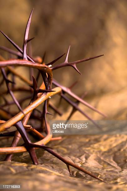 Crown of Thorns XL