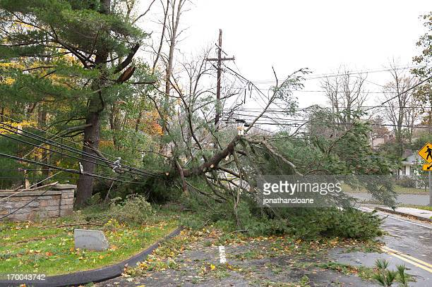 Crushed power line caused by fallen tree during Hurricane