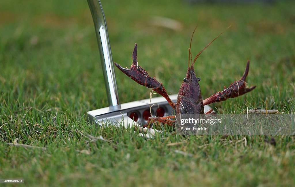 A Crustacean is moved by a golfers putter during the pro - am prior to the start of the Portugal masters at Oceanico Victoria Golf Club on October 8, 2014 in Albufeira, Portugal.