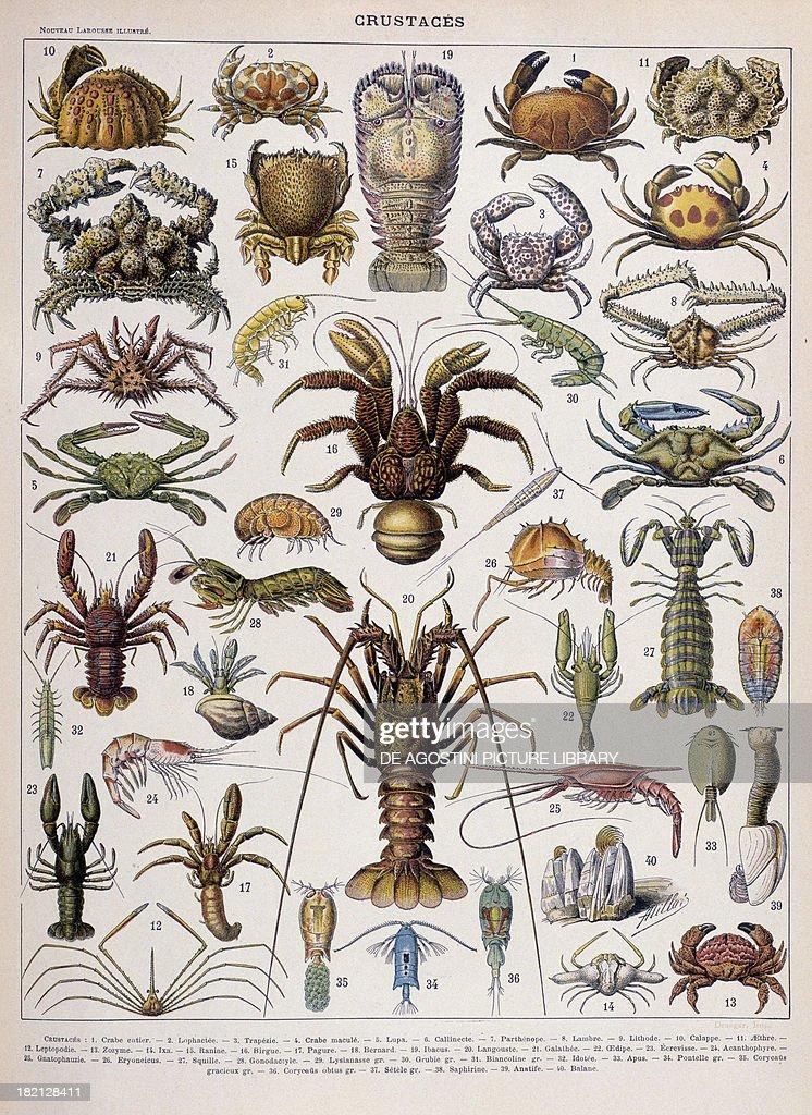 Crustacean varieties illustration