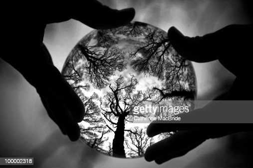 Crystal Ball Forest : Stock Photo