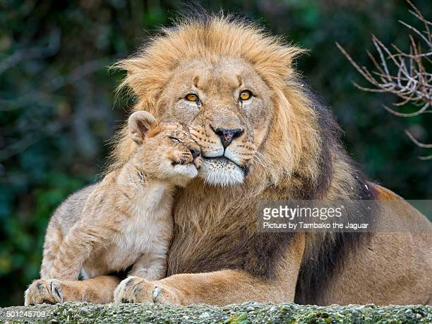 Cub loving his dad