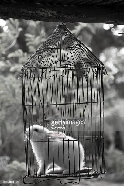 Cuba, Guanabo, rabbit in birdcage