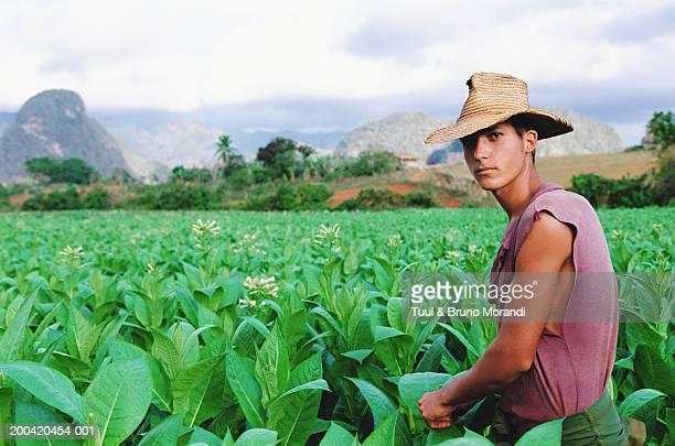 Cuba, Valle de Vinales, man  harvesting tobacco, portrait