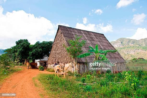 Cuba Vinales Farmer's House