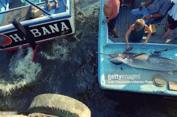 Cuban fishermen bring ashore a Blue Marlin in the little fishermen village Cojimar on June 13 in Havana Cuba The American writer and journalist...