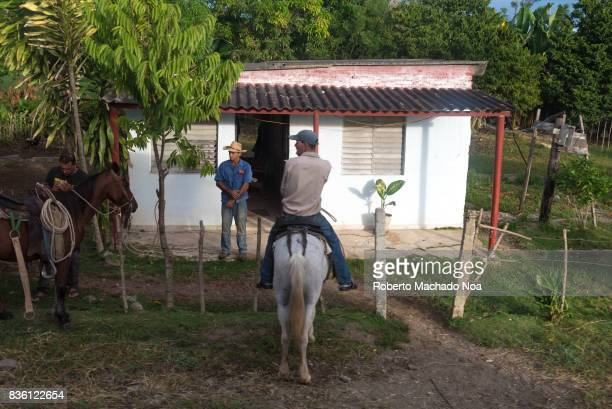 Cuban peasants lifestyle Man on white horse and another man standing before a typical white shed