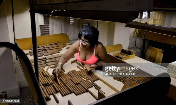 A Cuban roller selects cigars on February 27 2014 at the H Upmann cigar factory in Havana The production of Cuban cigars experienced an 8% growth in...